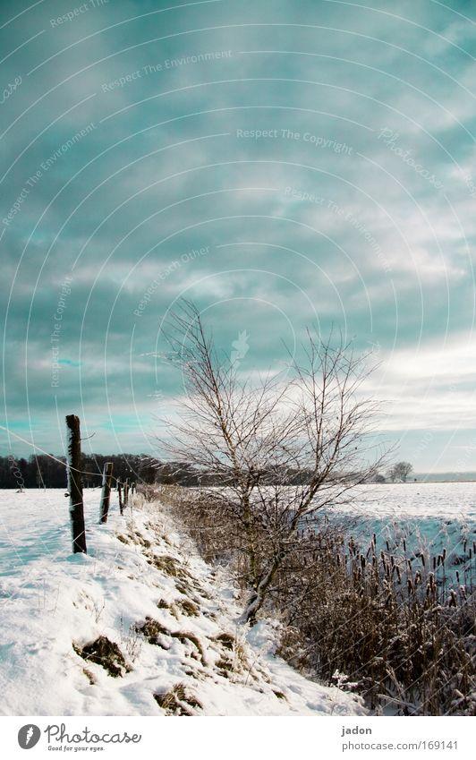 Später Winter Außenaufnahme Textfreiraum oben Tag Starke Tiefenschärfe ruhig Jagd Schnee Natur Landschaft Himmel Wolken Baum Sträucher Feld frieren wandern