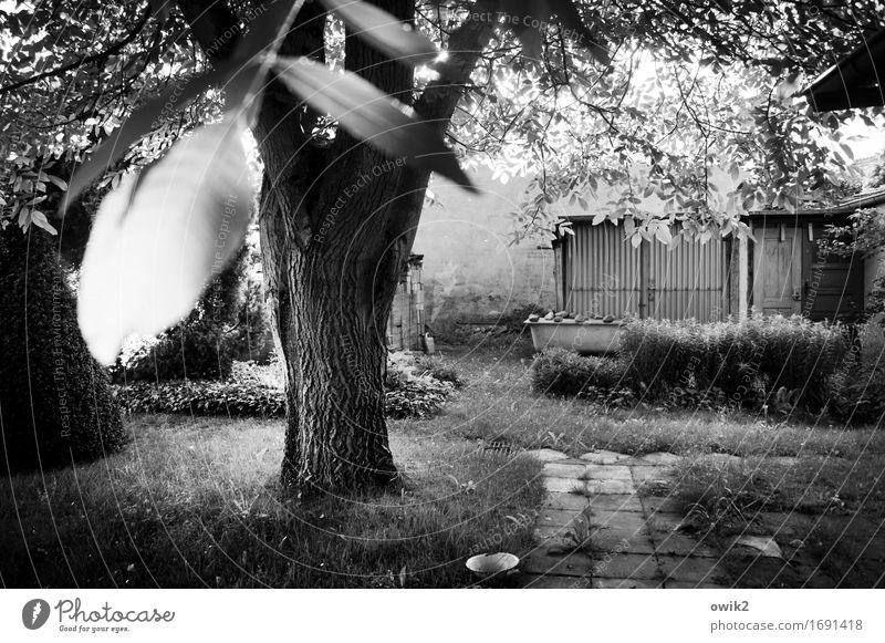 Warmer Tag Umwelt Natur Landschaft Pflanze Sommer Klima Schönes Wetter Baum Gras Sträucher Blatt Hecke Echter Walnussbaum Baumstamm Baumrinde Ast Zweige u. Äste