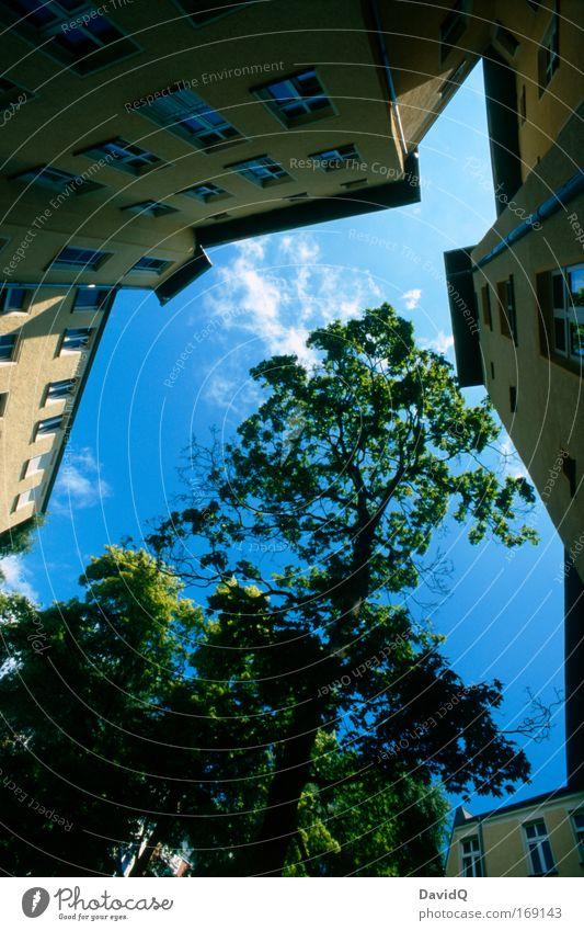 begrenzter lebensraum Natur Himmel Baum blau Stadt Pflanze Haus Wolken Fenster Gebäude Fassade Hinterhof Mieter Nachbar eckig Innenhof