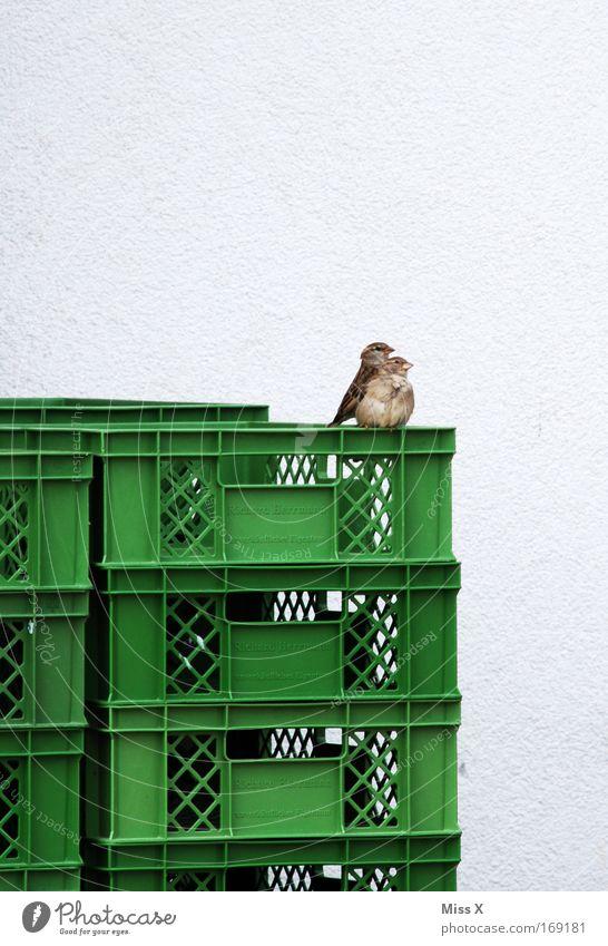 mami ich hab angst Farbfoto Außenaufnahme Tierporträt Vogel 2 Tierjunges Tierfamilie Angst Spatz Kiste sitzen beobachten Tierpaar paarweise Tag