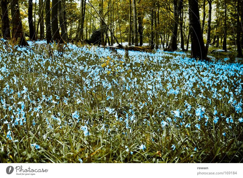 waldwiese schön Baum Blume blau Wald Wiese Blüte Gras Frühling Landschaft Wachstum Romantik Sträucher Blühend Duft Waldlichtung