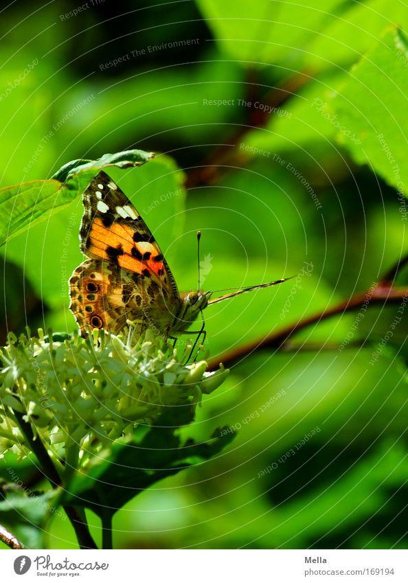 Letterschming Farbfoto mehrfarbig Außenaufnahme Menschenleer Tag Zentralperspektive Totale Ganzkörperaufnahme Umwelt Natur Pflanze Tier Frühling Sommer Baum