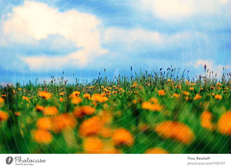 Sommerwiese Natur Himmel Wiese Landschaft Blühend Schönes Wetter Blauer Himmel Grünpflanze Wildpflanze