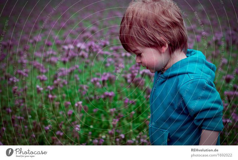 Kleinkind vor einem Blumenfeld Mensch Kind Junge Kindheit 1 1-3 Jahre Umwelt Natur Landschaft Blüte Feld Pullover Bewegung gehen klein natürlich grün violett