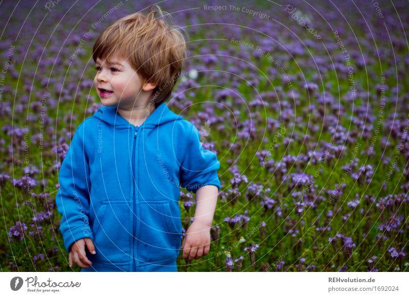 ärmel hoch Mensch maskulin Kind Kleinkind Junge 1 1-3 Jahre Umwelt Natur Blume Wiese Feld Pullover beobachten stehen warten Freundlichkeit Fröhlichkeit klein