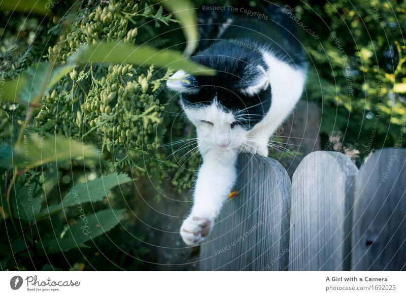 ich habe dich gleich Katze Tier Spielen fangen Jagd Haustier Pfote Trieb Verhalten