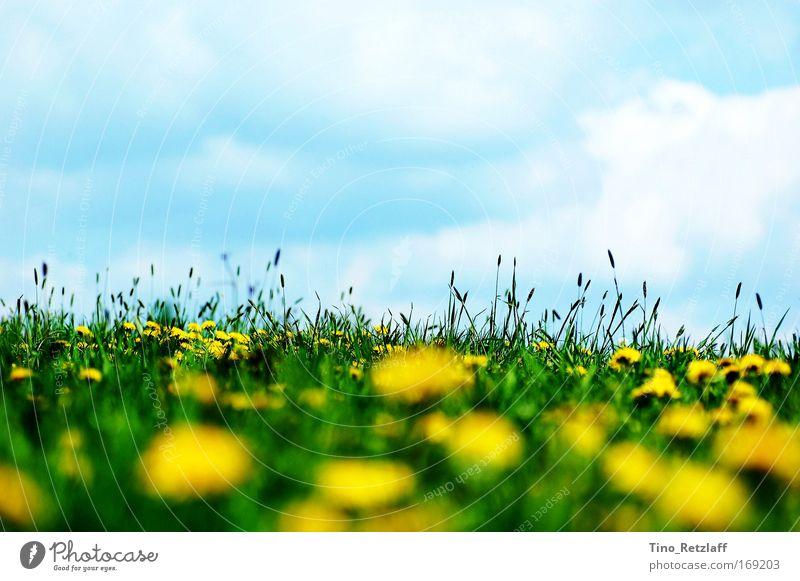 Sommerwiese2 Farbfoto Außenaufnahme Tag Sonnenlicht Froschperspektive Umwelt Natur Landschaft Himmel Wolken Frühling Schönes Wetter Pflanze Gras Grünpflanze