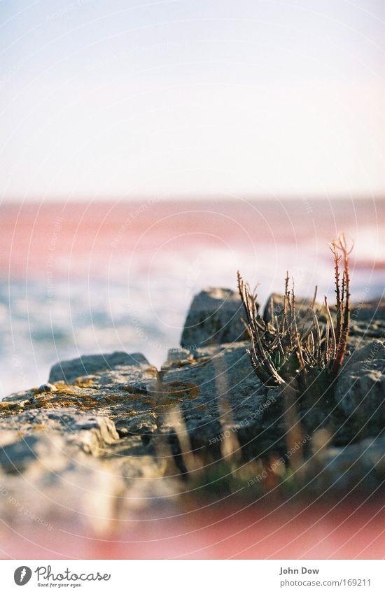Survival of the Fittest Wasser Meer Pflanze Einsamkeit Stein Luft Küste Wind Horizont Felsen Wachstum Sträucher einfach einzigartig Unendlichkeit Stengel