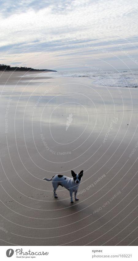 Not alone Natur Wasser Himmel Freude Strand Ferien & Urlaub & Reisen ruhig Wolken Einsamkeit Tier Erholung Spielen Hund Sand Landschaft Horizont