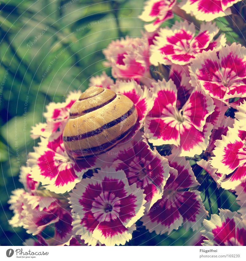 Häuschen mit Vorgarten und 1a Aussicht :) Natur Pflanze Tier Sommer Schönes Wetter Blume Gras Schnecke genießen sitzen Häusliches Leben krabbeln Streifen Muster
