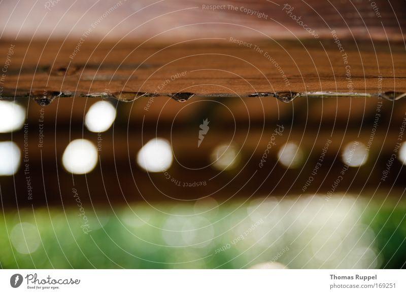 Trop(f)enholz Natur weiß grün Holz Regen braun Wassertropfen Kreis durchsichtig