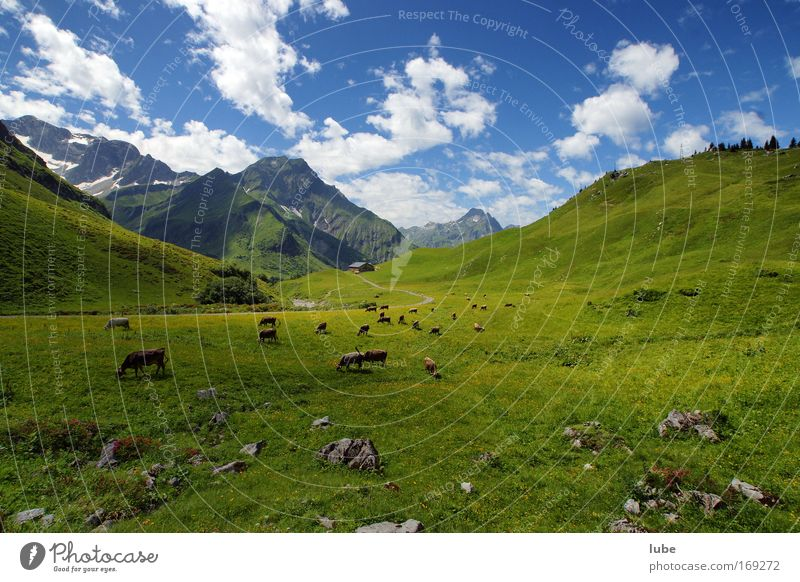 Almweide Natur blau grün Pflanze Sonne Sommer Wolken Tier Wiese Umwelt Landschaft Berge u. Gebirge Gras Wege & Pfade Horizont Feld