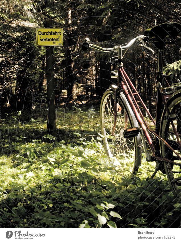 Durchfahrt verboten! Natur Baum Ferien & Urlaub & Reisen Pflanze Sonne Wald Erholung Umwelt Landschaft Wärme Gras Frühling lustig Fahrrad Freizeit & Hobby