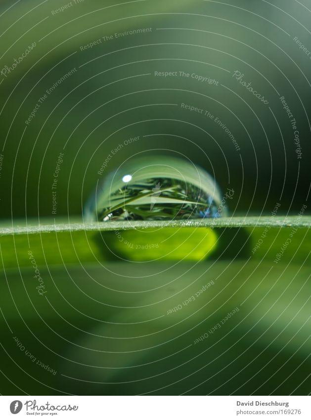 Nature in the tear Wasser grün Sommer Pflanze Blatt Gras Frühling Linie frisch Wassertropfen einzeln rund Tropfen Makroaufnahme Grünpflanze