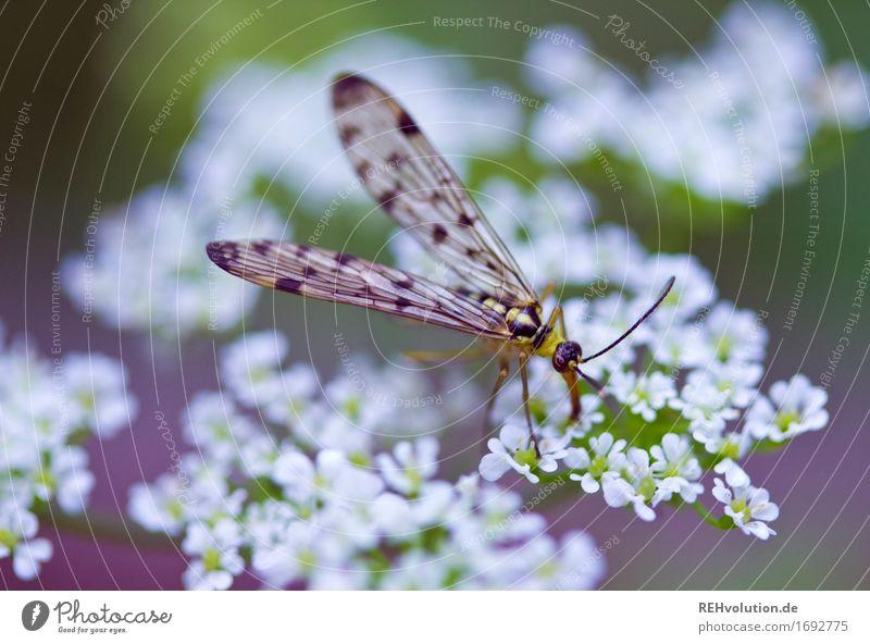 irgendeine Fliege oder so Umwelt Natur Pflanze Blume Tier 1 klein grün violett Insekt Nektar Farbfoto Außenaufnahme Nahaufnahme Detailaufnahme Makroaufnahme Tag