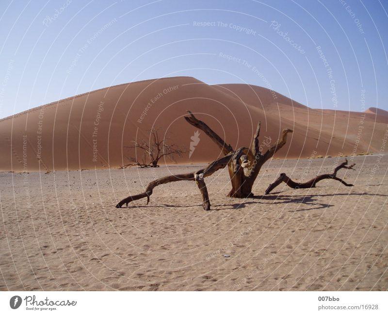 Düne Sand Afrika Wüste heiß trocken Namibia
