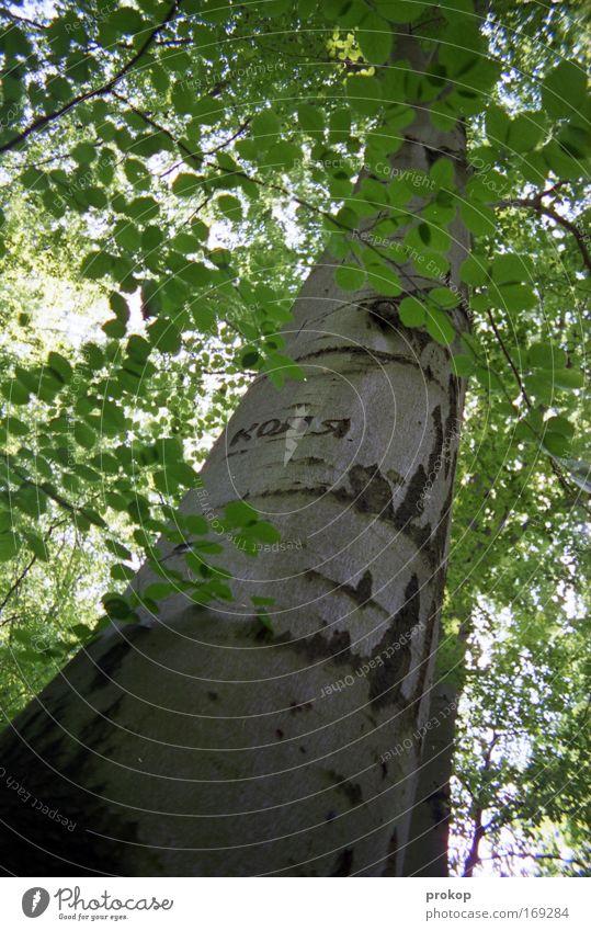 Kolja war hier Natur Baum Pflanze Blatt Umwelt authentisch Schriftzeichen einfach Duft aufwärts Ornament
