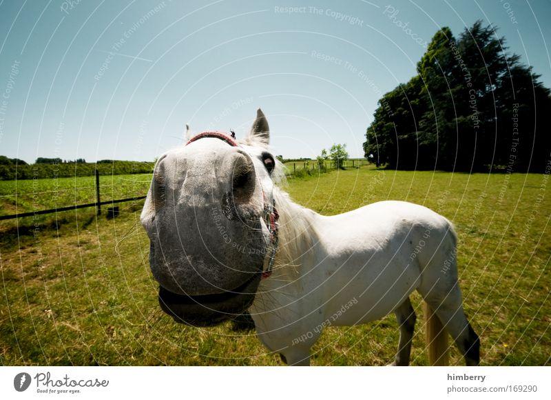 der kleine onkel Natur Himmel Pflanze Freude Tier Leben Wiese Landschaft Feld lustig Wetter Pferd Neugier Schönes Wetter Reiten Nutztier