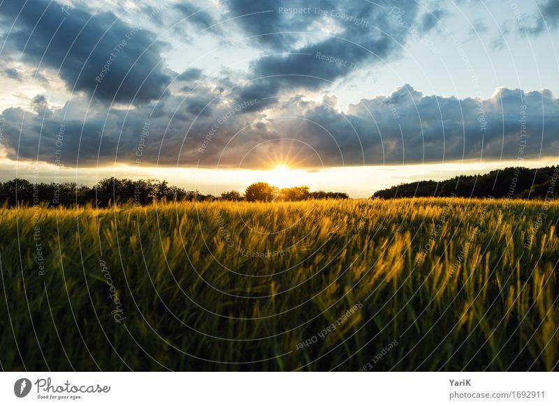 April im Juni III Umwelt Natur Landschaft Himmel Wolken Gewitterwolken Sonne Sonnenuntergang Sommer Klima Klimawandel Wetter Unwetter Wind Wiese Feld gold Wärme