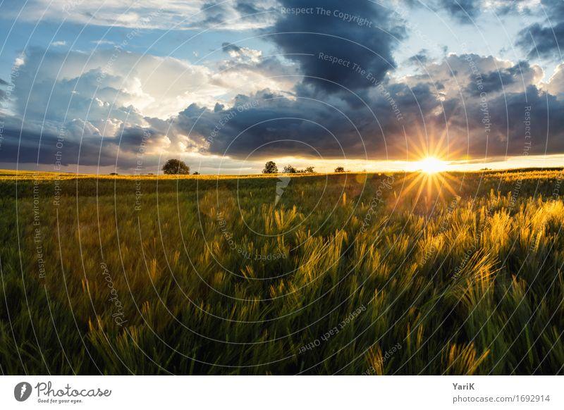 April im Juni I Umwelt Natur Landschaft Urelemente Himmel Wolken Gewitterwolken Sonne Sonnenaufgang Sonnenuntergang Sonnenlicht Sommer Klima Klimawandel Wetter