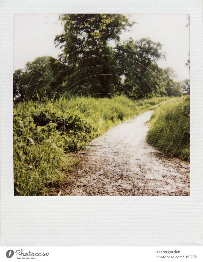 [HH09.3/4] der weg zum hexenhaus. Natur grün schön Baum Sommer Erholung Umwelt Berge u. Gebirge Garten Frühling Wege & Pfade Traurigkeit Park Freizeit & Hobby wild Wachstum