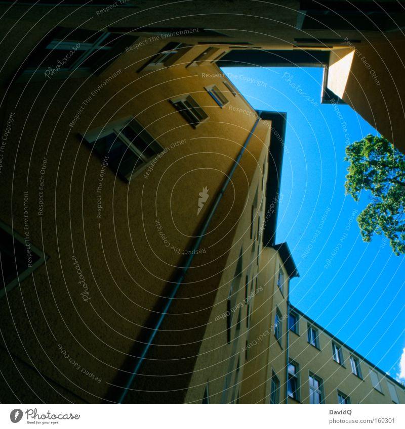 hinterhofhorizont Farbfoto Außenaufnahme Menschenleer Textfreiraum links Tag Licht Schatten Kontrast Silhouette Pflanze Baum Haus Bauwerk Fassade Fenster blau
