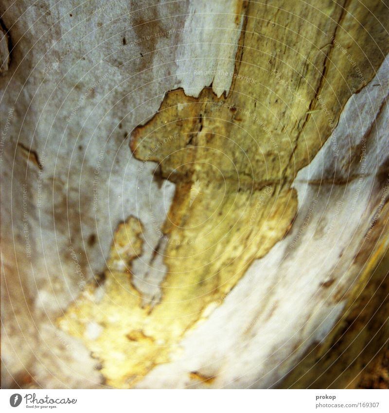 Prestigeobjekt Farbfoto Außenaufnahme Natur Pflanze Baum entdecken Baumrinde Landkarte Strukturen & Formen Holz Maserung Tag