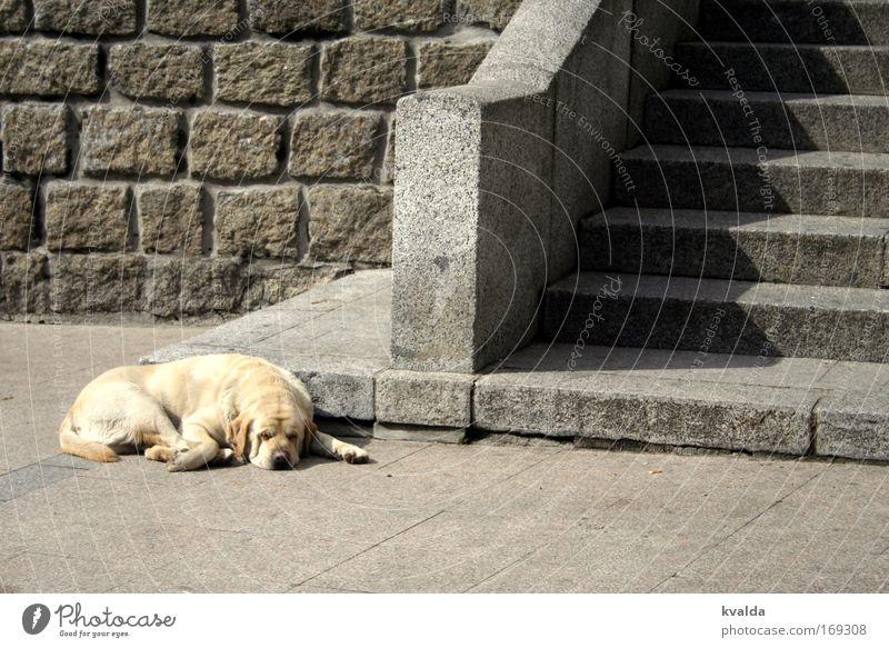 Natzen Sommer ruhig Tier Erholung grau Hund Stein Wärme Zufriedenheit gold Treppe Platz heiß Gelassenheit Langeweile