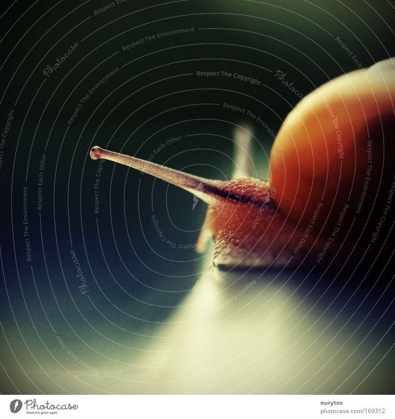 Lahme Schnecke! Farbfoto Außenaufnahme Makroaufnahme Lomografie Holga Textfreiraum oben Textfreiraum unten Tag Kontrast Reflexion & Spiegelung Unschärfe