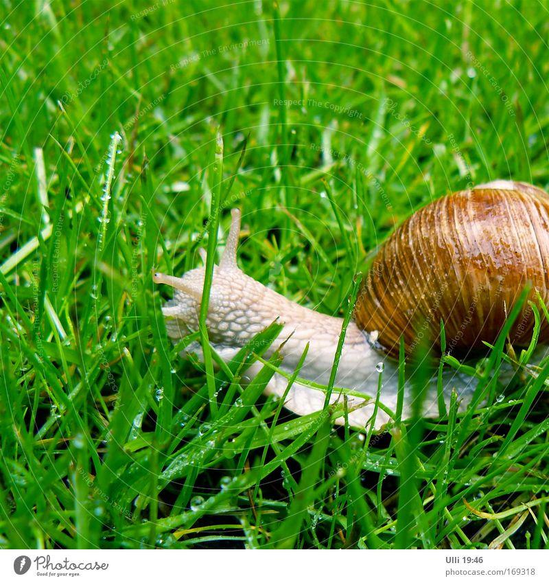 Name: Jutta. Beruf: Schnecke. Kosename: Juttaschnecke. Natur grün Tier Bewegung Wiese Gras Garten braun glänzend Erde Geschwindigkeit nass niedlich weich