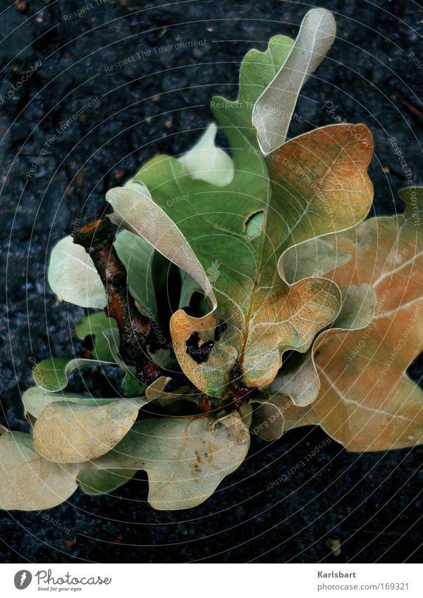 laub. gebrochen. Natur Sommer Herbst schlechtes Wetter Regen Baum Blatt Park Wiese alt Duft liegen grün Farbe Klima rein Umwelt Vergänglichkeit