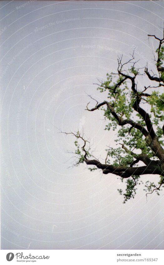 [HH09.3/4] achtung - baum von rechts! Natur grün Baum Pflanze Sommer Erholung Umwelt dunkel Frühling Holz Park braun Wetter Kraft Klima Wachstum