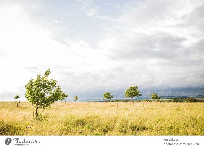 Felder in Deutschland Natur Landschaft Pflanze Himmel Wolken Sonne Sonnenlicht Sommer Baum Gras gelb gold grün Landwirtschaft Baden-Württemberg Farbfoto