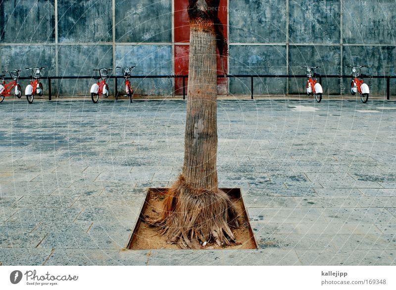 zentriert Natur Stadt Baum rot Ferien & Urlaub & Reisen Pflanze Umwelt Wand Wege & Pfade Sand Mauer Park Fahrrad Fassade Freizeit & Hobby Klima