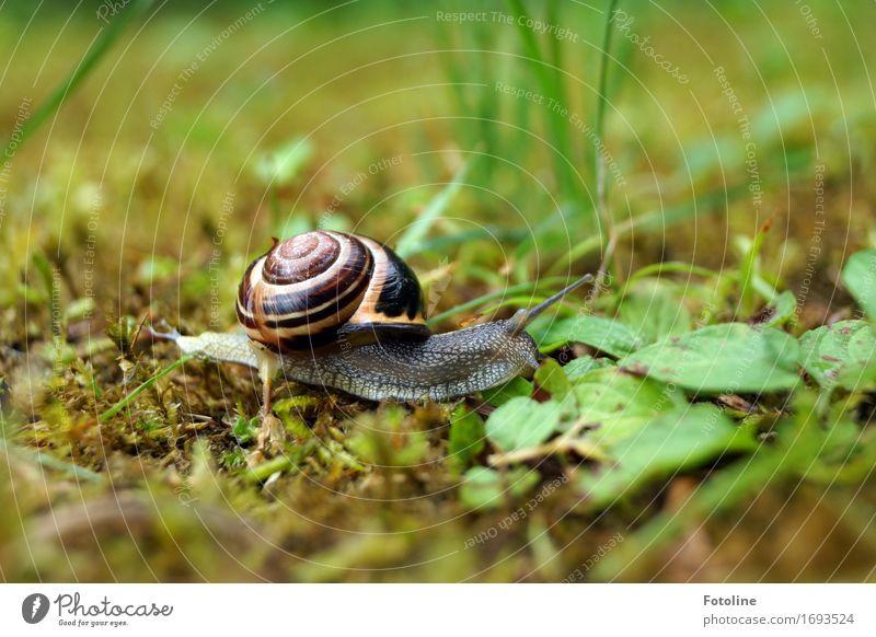 Schneckchen Natur Pflanze Sommer grün Tier Umwelt Wiese Gras klein Garten braun Park frei Moos Glätte krabbeln
