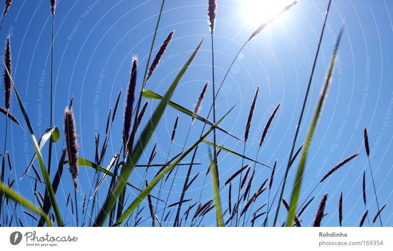 bitte mit Strohhalm Farbfoto Außenaufnahme Detailaufnahme Tag Licht Sonnenlicht Sonnenstrahlen Gegenlicht Froschperspektive Natur Landschaft Pflanze Luft Himmel