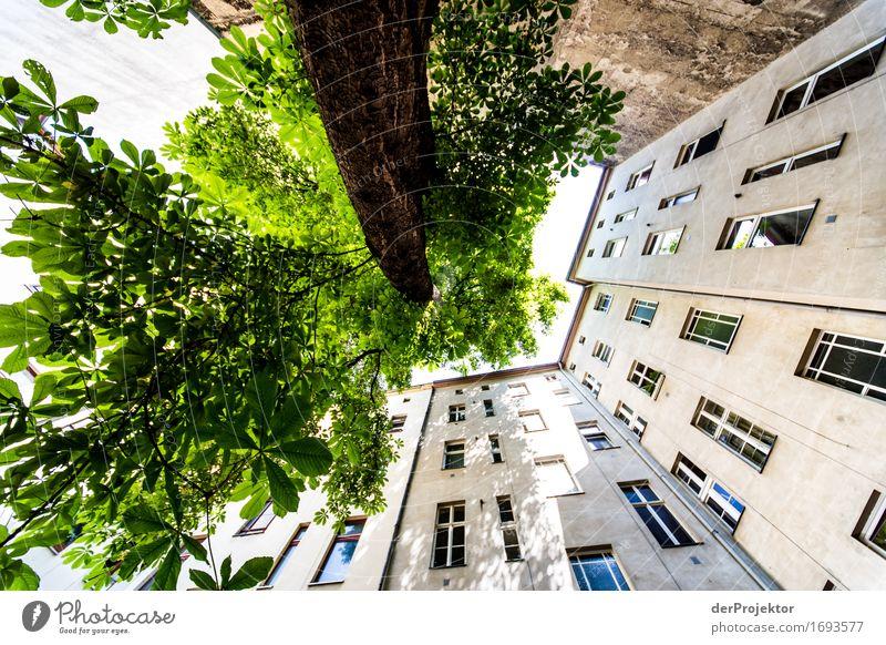 Baum und Wand wachsen gen Himmel Ferien & Urlaub & Reisen Stadt Sommer Haus Fenster Berlin Mauer außergewöhnlich Freiheit Fassade Tourismus Wachstum wandern