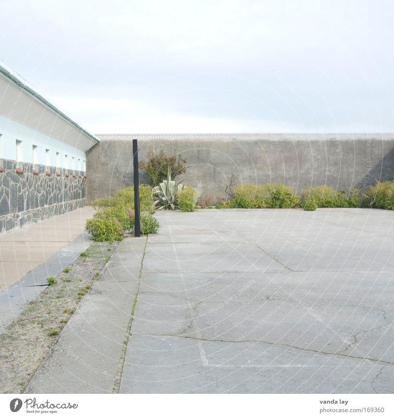Long Walk To Freedom Pflanze Sommer Ferien & Urlaub & Reisen Wand Freiheit Mauer Beton Stadt Justizvollzugsanstalt Sightseeing Sehenswürdigkeit Sommerurlaub