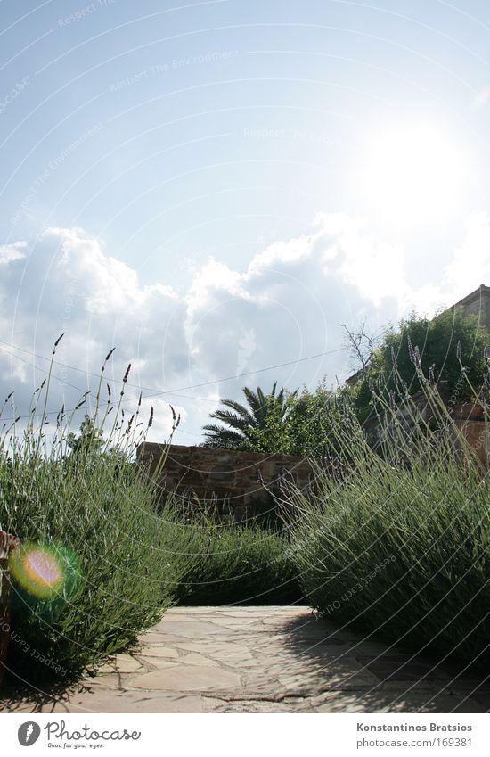 Herzlich Willkommen schön weiß Baum Sonne grün blau Pflanze Sommer Ferien & Urlaub & Reisen ruhig Garten Wärme Zufriedenheit hell Europa Tourismus