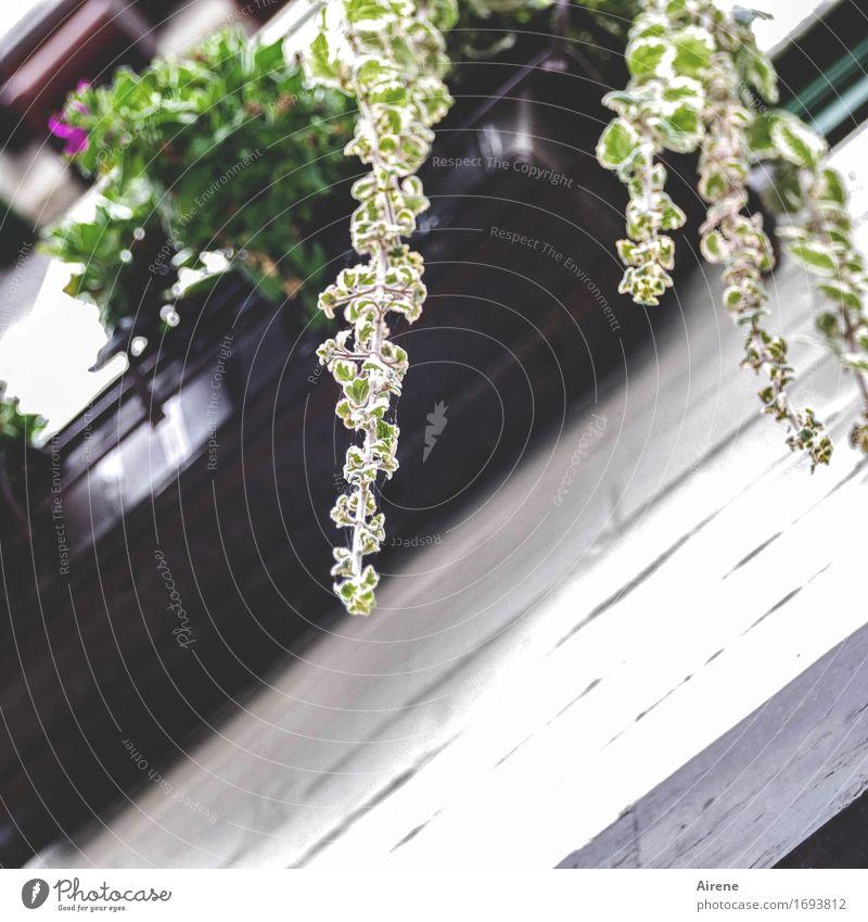 herablassend pflanze gr n ein lizenzfreies stock foto. Black Bedroom Furniture Sets. Home Design Ideas
