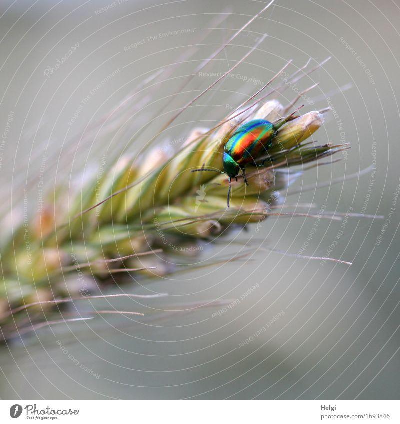 bunt schillernd... Natur Pflanze Sommer schön Tier Umwelt Leben natürlich klein grau Freiheit braun glänzend Feld Wildtier ästhetisch