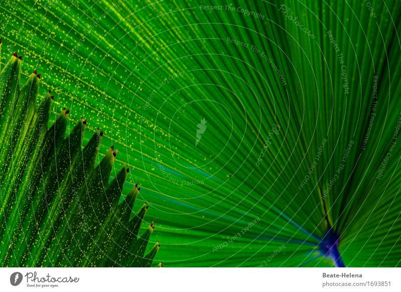 kreativ | Schattenspender Garten Schönes Wetter Pflanze Baum Blatt Grünpflanze exotisch Palmendach Park Dekoration & Verzierung entdecken Erholung