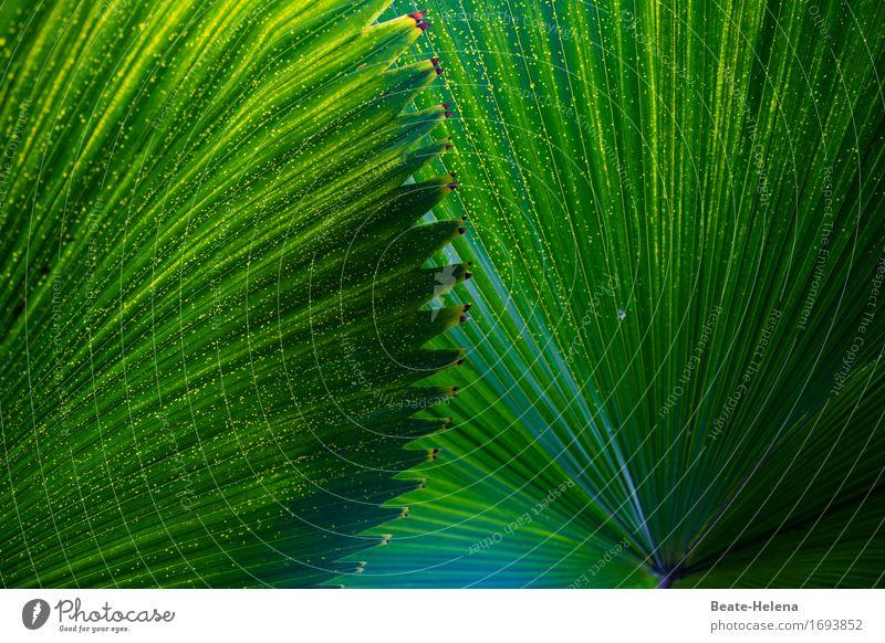 Urlaubsfeeling Natur Ferien & Urlaub & Reisen Pflanze grün Baum Erholung ruhig Gefühle außergewöhnlich Freizeit & Hobby Zufriedenheit ästhetisch Coolness Schutz