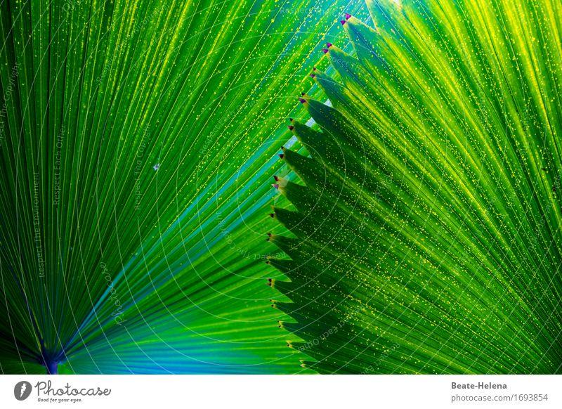 Klangfarbe | Le Sacre du Printemps elegant Natur Pflanze Grünpflanze exotisch Park Schirm ästhetisch außergewöhnlich positiv grün Sicherheit Schutz Schatten