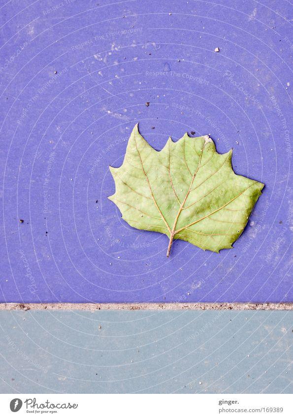 Ein Blatt ästhetisch natürlich violett Fuge Asymmetrie grün Vergänglichkeit Bodenplatten Fliesen u. Kacheln Blattadern vertrocknet Zacken blau Textfreiraum oben
