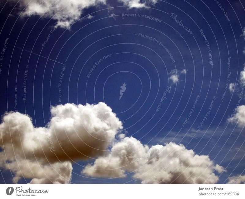 Wolken Freiheit Sommer Himmel nur Himmel Sonnenlicht Klima Klimawandel Wetter blau weiß Leben träumen Unendlichkeit Luft Farbfoto Außenaufnahme Menschenleer