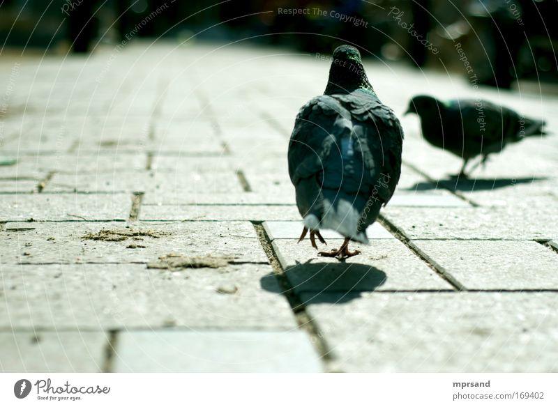 grün Stadt Tier Bewegung Freiheit grau Stein braun Horizont Vogel Wildtier laufen Fröhlichkeit Perspektive Neugier Gelassenheit