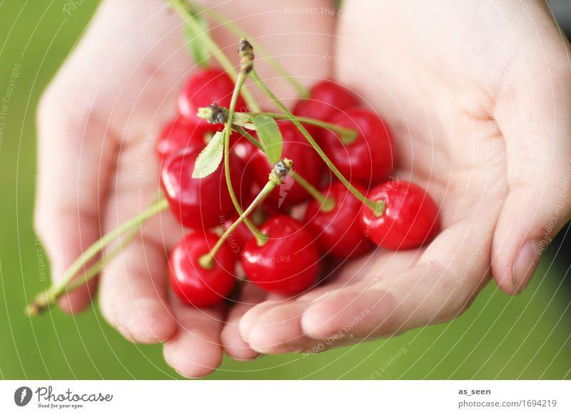 Kirschernte Natur Farbe Sommer Hand rot Umwelt Leben natürlich Gesundheit Garten Lebensmittel Frucht frisch Ernährung Kindheit genießen