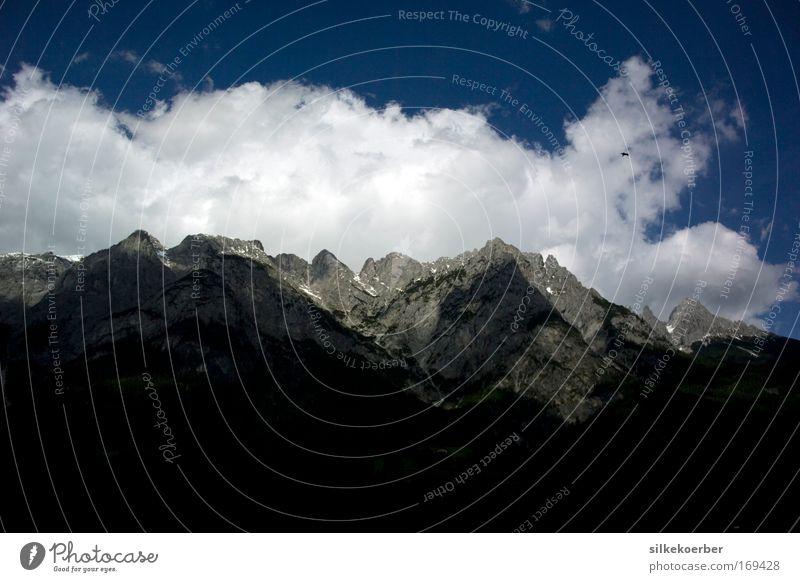 weather to fly Himmel Natur Wolken ruhig Landschaft Freiheit Berge u. Gebirge Vogel Kraft fliegen Alpen Schönes Wetter Österreich Greifvogel Falken Bundesland Salzburg