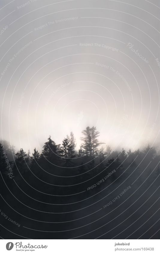 Seltsam, im Nebel zu wandern Himmel Natur Baum Einsamkeit dunkel Wald Traurigkeit grau oben hell Luft Angst Spitze bedrohlich geheimnisvoll